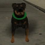 Собака Chop для GTA San Andreas