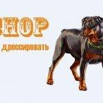GTA 5 Собака Чоп Инструкция по дрессировке